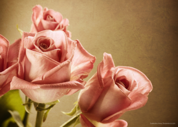 SWEETY ROSE_PRINTED PICTURE